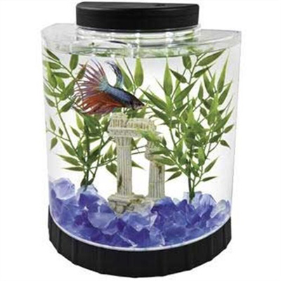 4. Tetra LED Half Moon, Betta Kit, 1.1-Gallon