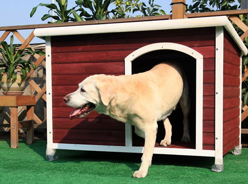 #9. Petsfit Dog House, Dog House Outdoor